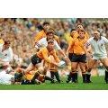 Australia rugby 1991